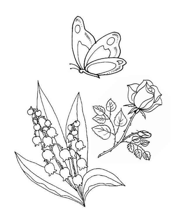 Coloriage 1 mai - Muguet dessin ...
