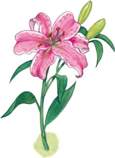 Gommette fleur - Dessin de fleur en couleur ...